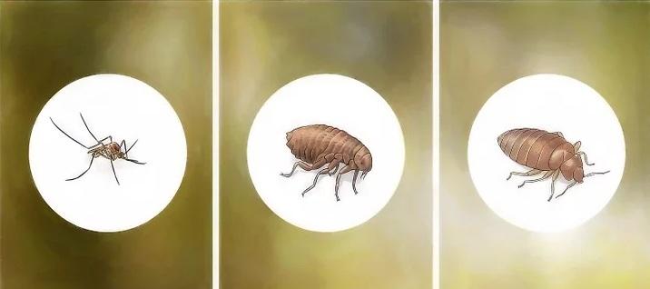 حشرات زاحفة طائرة قافزة