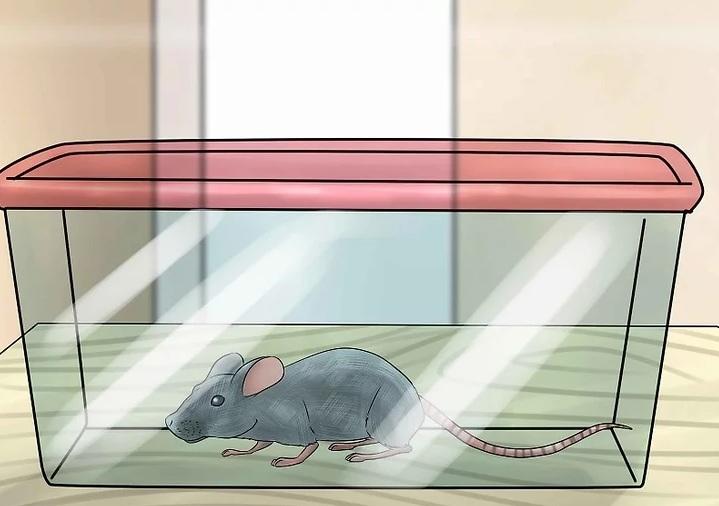 قوارض فئران